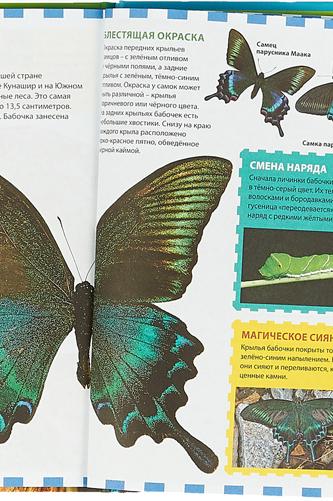 Бабочки. Феданова Юлия Валентиновна, Скиба Томара Викторовна